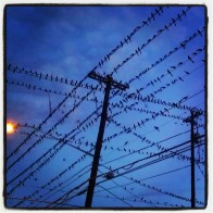 Austin Grackle Convention